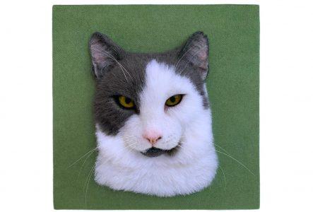 White gray cat